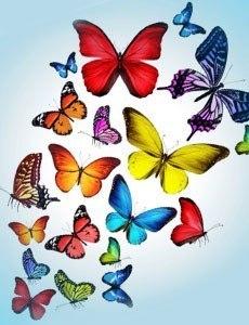 бабочки картинки фото